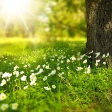 New UK study suggests that vitamin D could help in the fight against COVID-19
