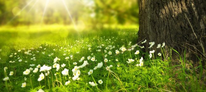 How 'green medicine' could help Generation Lockdown rejuvenate post-Covid